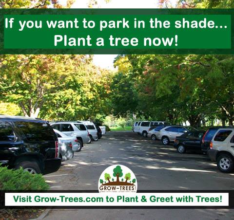 Benefits of Planting Trees for Shade!