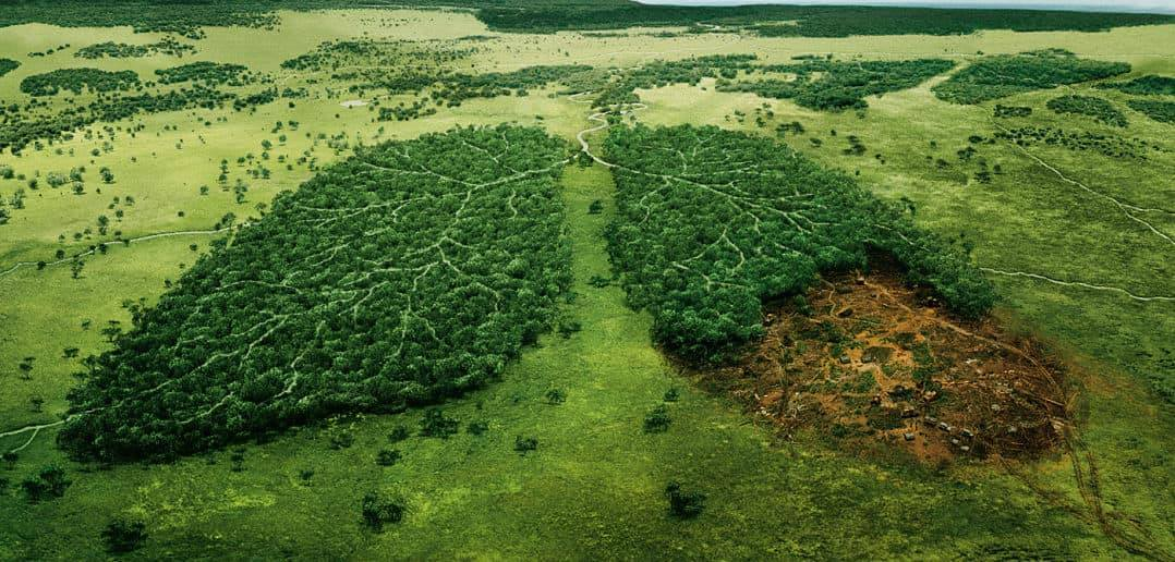 How many trees does planet Earth have?