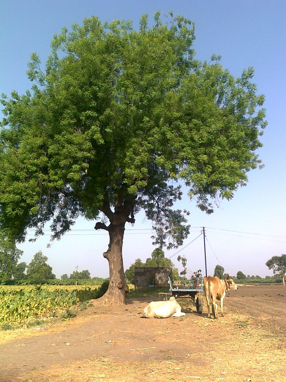 Trees in Indian Mythology and Spirituality – Grow-Trees Blog