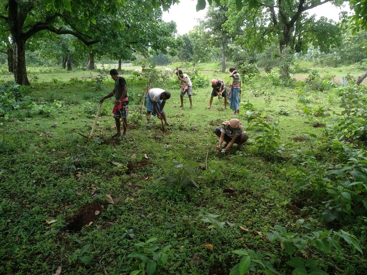 Celebrate trees for Van Mahotsav week! – Grow-Trees Blog