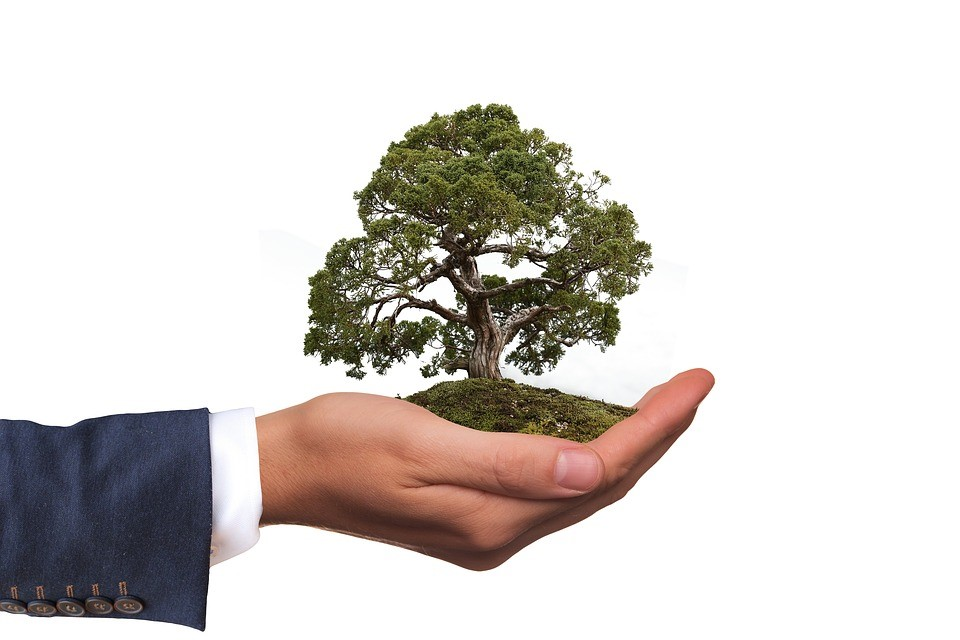 Simple Ways Your Business Can Save the Planet (Guest Blog by Allison Hail)