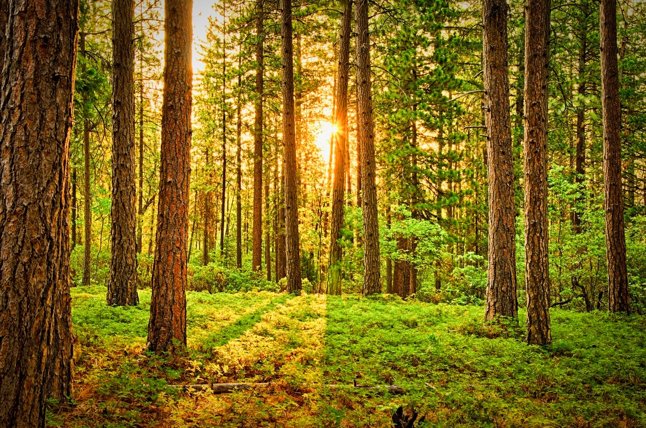 Are forests the real answer for climate change mitigation?